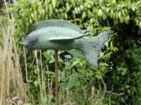 Vliegend-visje-6